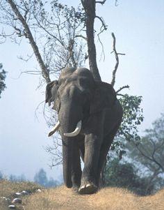 Beautiful... Rishikesh, Elephant, Animals, Beautiful, Animais, Animales, Animaux, Elephants, Animal