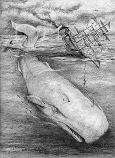 Have ye seen the white whale. Moby Dick 8 X by fishfanatic Pencil Drawing Tutorials, Pencil Drawings, Le Kraken, Captain Ahab, Whale Drawing, Whale Tattoos, Whale Art, Sea Monsters, Sea Creatures
