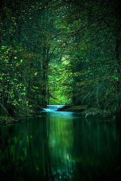 Quiet Green Reflections