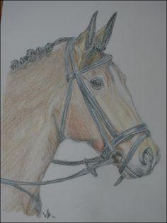 Verwonderlijk 25 beste afbeeldingen van paarden tekeningen - Paard tekeningen UG-88