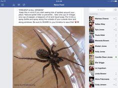 Prevent or kill spiders