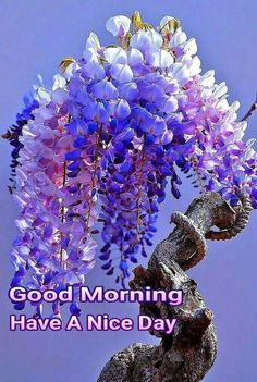 Yesterday is gone , tomorrow is mystery, Today is blessing . Good Morning Gif Images, Romantic Good Morning Quotes, Good Morning Beautiful Pictures, Good Morning Images Flowers, Good Morning Quotes For Him, Good Morning Texts, Good Morning Picture, Good Morning Messages, Morning Pictures
