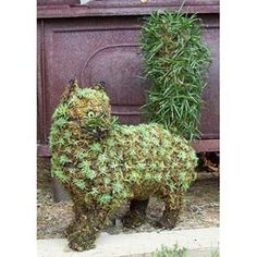 LANDSCAPING:  Topiary cat...absolutely.  I love the bushy tail.