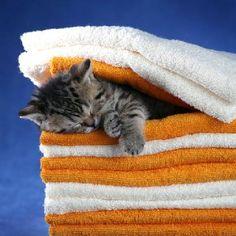 Freshly folded kitten