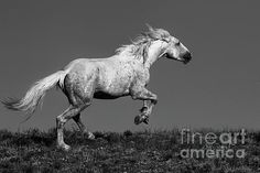 Over the Moon by Jim Garrison Colorado Trail, Wild Mustangs, Over The Moon, Photo Contest, First Photo, Fine Art Photography, Fine Art America, Monochrome, Wildlife