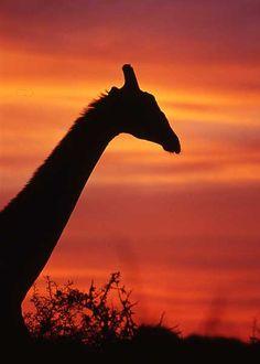 #Kruger National Park, South Africa
