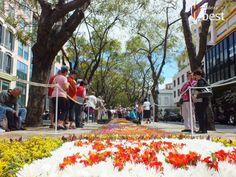 Madeira Flower Festival   #madeira #flower #festival