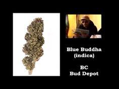 skunkparadise:    sensationelis:    Buy Marijuana Seeds  NaTuRe WiLL WiN