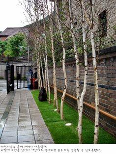 평창동 주택 조경공사 / 소나무 제거 및 자작나무 식재 : 네이버 블로그
