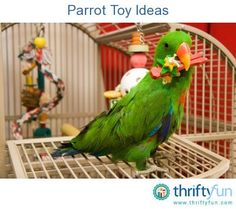 This is a guide about parrot toy ideas. There are a lot of bird toys on the market, some quite expensive.