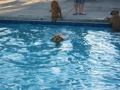 Doggie Dip Day at Fox & Hounds Apartments in Columbus, Ohio! One of our favorite events of the year