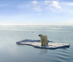 The last Polar Bear by Gerard Van der Leun