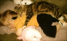 cats can sleep anywhere :)