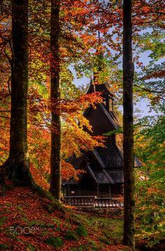NORWAY -- autumn trees forest fall  norge stavkirke beechwood Bergen Fantoft Stave church