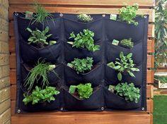 The parterre July 2016 Small Space Gardening, Garden Spaces, Tropical Garden, Summer Garden, Garden Solutions, Gardening Services, West London, Herb Garden, Garden Inspiration
