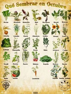 However, when you get a live wreath you may find some of them are going to be very. Garden Of Eden, Herb Garden, Vegetable Garden, Garden Plants, Planting Vegetables, Indoor Garden, House Plants, Organic Farming, Organic Gardening