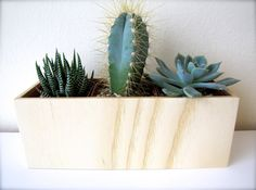 Desktop+Plant+Holder+Planter+for+Succulents+by+thewoodybeckers,+$30.00