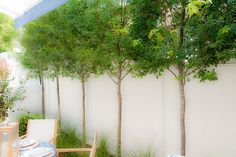 small trees planted along the private garden fence of the 2011 Coastal Living Idea House provide cooling shade and privacy from the neighbor...