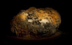 Rotten food landscapes by Heikki Leis - Telegraph
