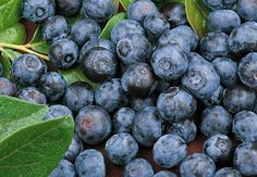 Myrtillier Blue Crop