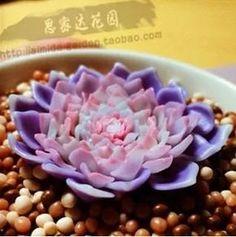 24 sementes de suculentas-raras Mais