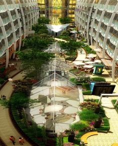 Royal Caribbean Oasis of the Seas will have the first ever living park at sea (Central Park) and features 93 different plant varieties. There are 12,175 plants, 62 vine plants, 56 trees and bamboo some of which are over 24 feet tall!