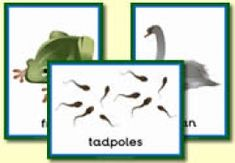 Animal Themed Resources including pond life, birds, jungle, polar, sea, river and lake animals.