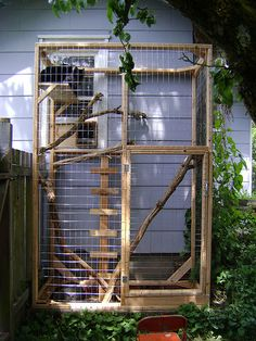 tall outdoor cat run against the side of a house with two cats on an upper shelf