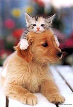 imagenes graciosas de animales - Buscar con Google