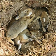 a bunch of bunnies...