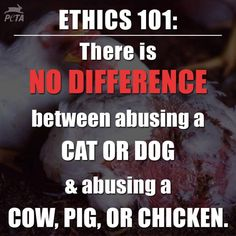 Is there any difference in killing or abusing a dog or a pig?