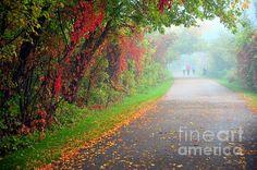 Autumn foliage embraces the bike path in Cadillac Michigan USA,