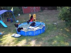 Momma Bear and Cubs Caught Having a Pool Party in Backyard - YouTube