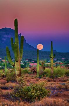 Arizona has many must-visit towns that features both impressive scenery and history. Read our guide to the ten most scenic historical towns in Arizona. Beautiful World, Beautiful Places, Beautiful Moon, Magic Places, All Nature, Flowers Nature, Pretty Pictures, Amazing Pictures, Desert Pictures