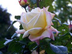 Serralves [2009 - Porto / Oporto - Portugal] #fotografias #flor #flores #flower #flowers
