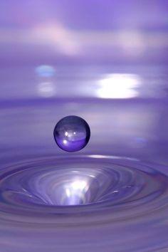 dewdrops   dewdrops / Drop of purple.
