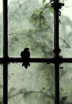 Bird by the window by VoyageVisuelle