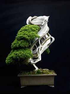 Bonsai. Japan. Photography by PK on Flickr