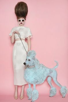 The Spaniels got a break as Americans rolled into the 70's. When you think about dogs in fashion, the most iconic breed that comes to mind is the Poodle, of course.