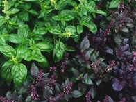 Use this simple guide to herbs from HGTVGardens.com to help you select the best crops for your garden and containers.