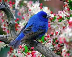 Colourful birds.