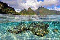 Ofu Island Coral Over Under 1 by Cornforth Images, via Flickr #AmericanSamoa