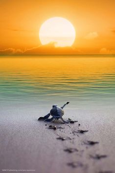 Sea Turtle – Famous Last Words Beautiful Sea Creatures, Animals Beautiful, Cute Baby Turtles, Turtle Baby, Sea Turtle Pictures, Underwater Animals, Baby Animals Pictures, Turtle Love, Tier Fotos