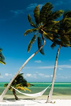 I want to be in that hammock in the Florida Keys.