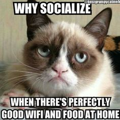 Lol. My feelings exactly Grumpy Cat!                                                                                                                                                                                 More