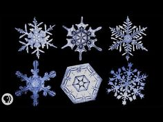 """""""Under the microscope, I found that snowflakes were miracles of beauty; and it seemed a shame that this beauty should not be seen and appreciated by others. ..."""