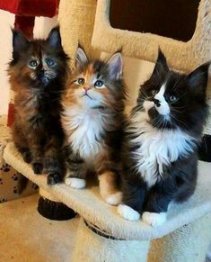 Three adorable and cute kittens