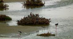 Ammitis wetland | Naxos.gr
