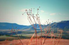 Photography Dandelion, Flowers, Plants, Photography, Photograph, Dandelions, Fotografie, Photoshoot, Plant