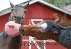 Pet Photography Art Card Horses Play With Pink by overthefenceart, $4.00